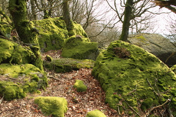 Moss covered rocks and trees