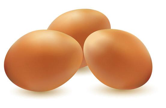 vector illustration of three eggs