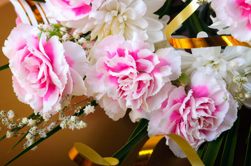 Carnation pink ,Flowers
