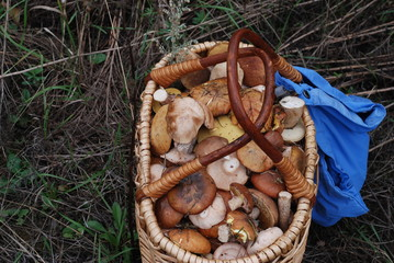 Basket with a collection of fungi