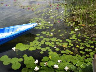 Dutch Lake, Clearwater, British Columbia, Canada