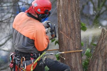 Klettergurt Baum : Bilder und videos suchen klettergurte