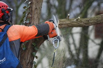 Klettergurt Baumklettern : Steigeisen baumklettern sportartikel sportbekleidung sportschuhe