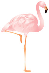 Flamingo in vector