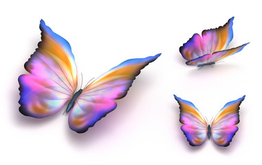 Colorful butterfly over white