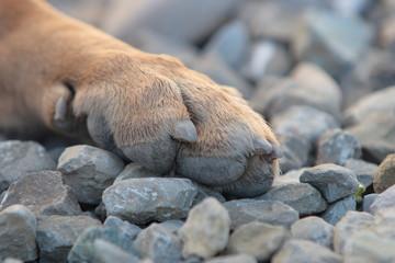 zampe cane pastore tedesco