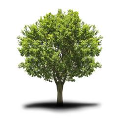 Fototapete - Baum
