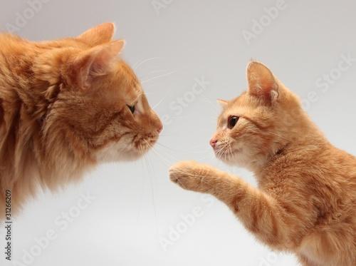 cat stress plug in