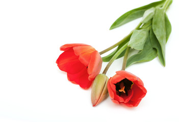 three red tulips and empty space