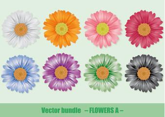 Bunte Blüten Gerbera