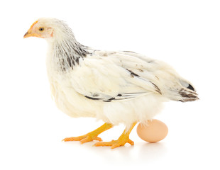 white hen with egg