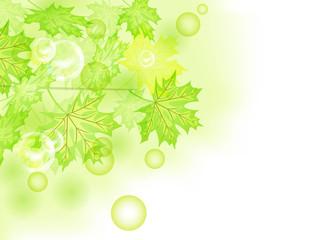 Beautiful nature. Summer green leaf. Vector.