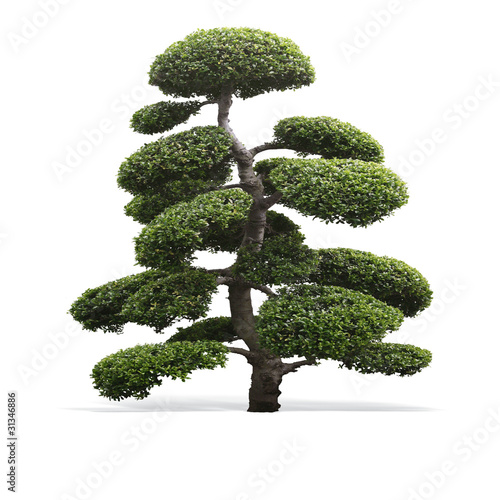 Baum Exotisch Stock Photo And Royalty Free Images On Fotolia Com