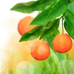Fresh orange background