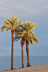 Empty beach and palm trees on the Dead Sea