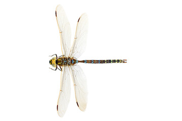 Dragonfly , isolated on white