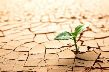 Wall Murals Drought Plant in dried cracked mud