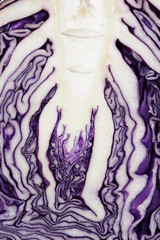 Cut surface texture of red cabbage