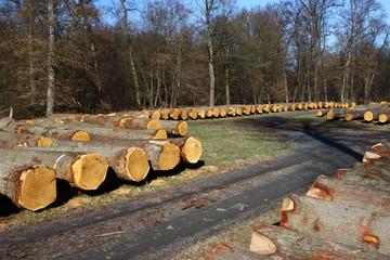 Wald Forstwirtschaft Lager mit Baumstämmen