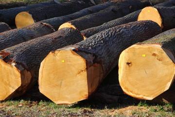 Wald Baumstamm gefällt