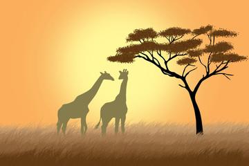 Two giraffes over sunrise near acacia