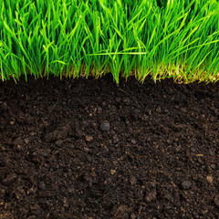 healthy grass and soil