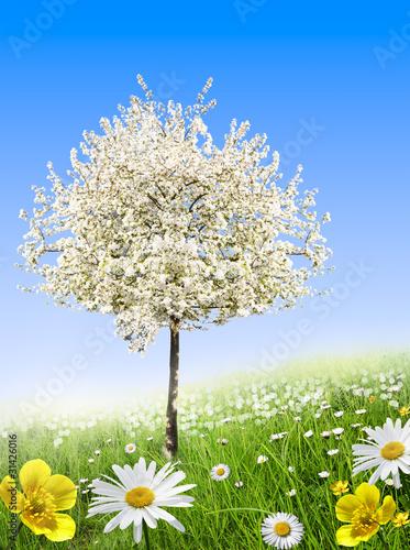 Arbre en fleurs au printemps photo libre de droits sur la banque d 39 images image - Arbre fleurs rouges printemps ...