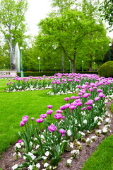 Colorful tulips in park in spring