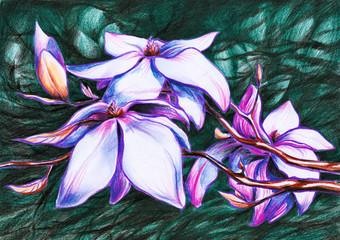 Magnolia-colored pencils