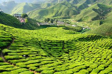 Malaysia, Cameron Highlands, Tea plantation Wall mural