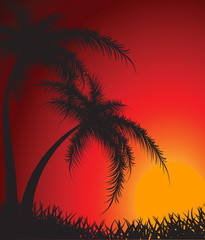 Silhouettes of palm trees against a decline
