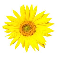 Sunflower cutout