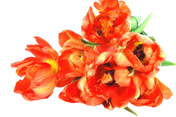 Bukiet rozwiniętych tulipanów
