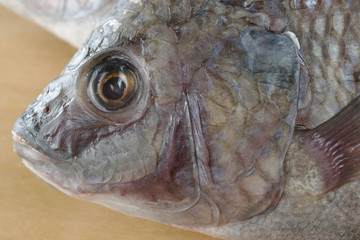 Head of a fish called Tilapia (Close-Up)