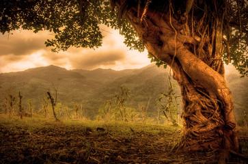 beautiful entangled fairy tale tree in sepia tones