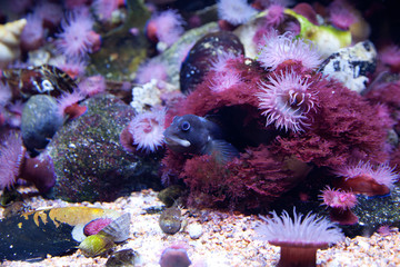 kleiner Fisch und Seeanemone 2