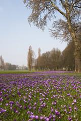 Rheinpark, Düsseldorf