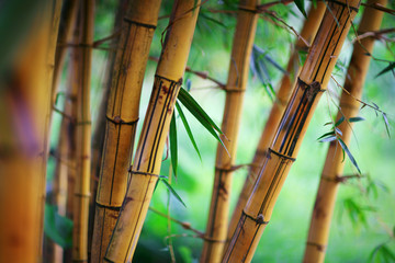 Foto auf AluDibond Bambusse Bamboo forest background