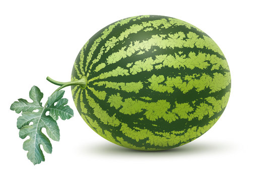 Watermelon and leaf