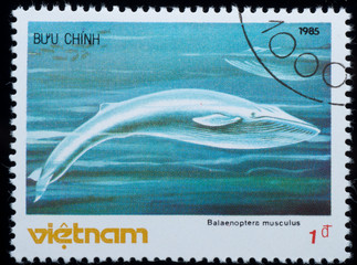 VIETNAM - CIRCA 19805 :  stamp - animal whale
