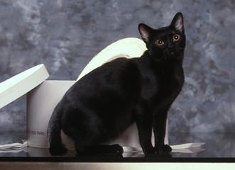 bombay assis de profil - chat noir - black cat