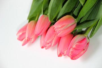 Fototapete - Tulpen