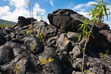 paysage chaotique de laves volcaniques refroidies, Réunion