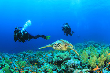 Underwater photographers and Hawksbill Sea Turtle