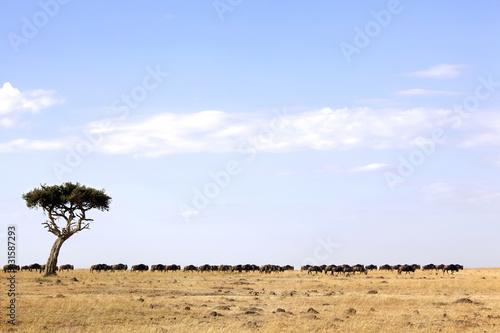 Blue Wildebeests at Sunrise, Masai Mara, Kenya  № 1443711 бесплатно