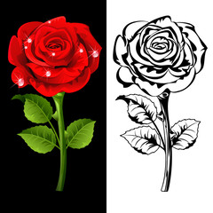 Set from  red and white roses.