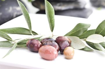 branche d'olivier de provence