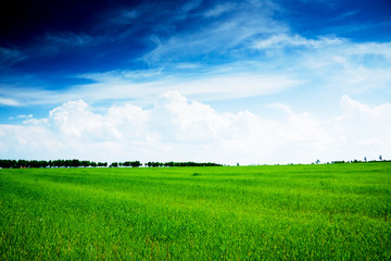 summer landscape green field and trees