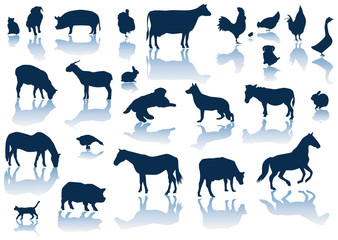 vector farm animals with reflection