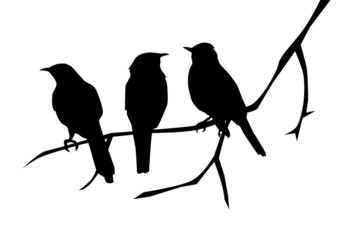 vector bird silhouettes